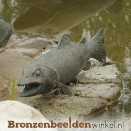 Beeld Snoekbaars vis BBWR88252