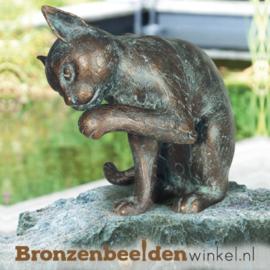 Kat van brons BBW37044