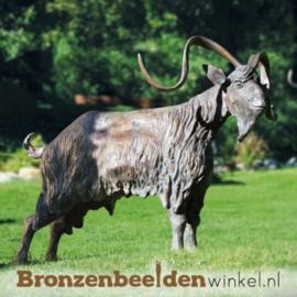 Bronzen bok BBW87132