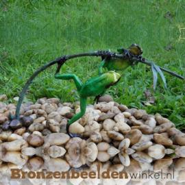 Beeld groene regenwoudkikkers BBW0981BR