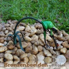 Groene regenwoudkikker beeld BBW0988BR