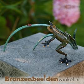 Bronzen kikker BBW1736BR