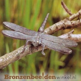 Beeld libelle BBWR88307