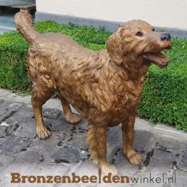 Honden beeld Golden Retriever BBW37222