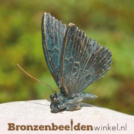 Beeld vlinder brons BBWR88635