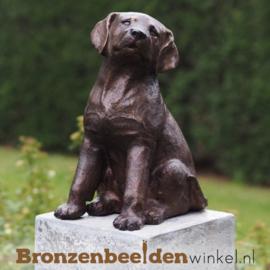 Honden beeld puppy BBW4731