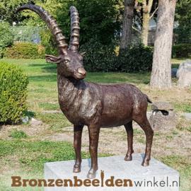 Steenbok beeld brons BBWR88584