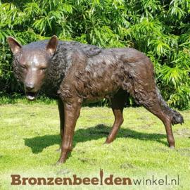 Bronzen wolf beeld BBW75034