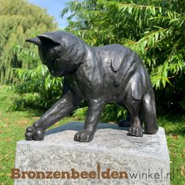 Blijvende herinnering spelende kat met bal BBW1354br
