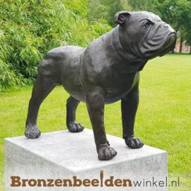 Beeld Bulldog hond BBW28773