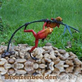Beeld rode regenwoudkikkers BBW0982BR