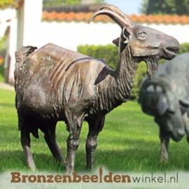 Bronzen geit tuinbeeld BBW87042