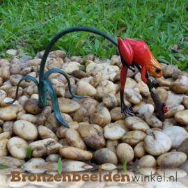 Rode regenwoudkikker beeld BBW0989BR