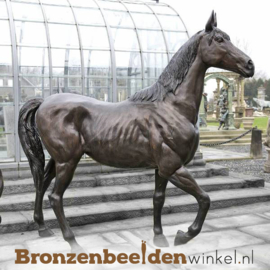 Beeld paard als tuinbeeld BBW1004