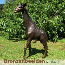 Bronzen baby giraffe beeld BBWB860-1