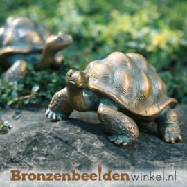 Bronzen schildpad beeld BBW37042
