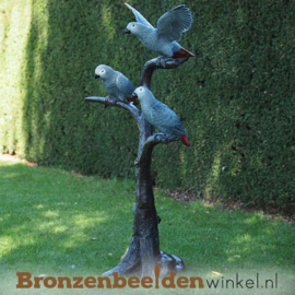 Beeld Grijze Roodstaart papegaaien BBW1375br