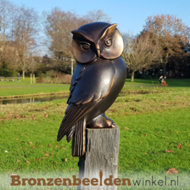 Bronzen uil beeld BBW37234