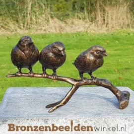 Populaire vogel beelden
