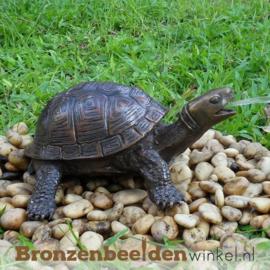 Bronzen beeld schildpad BBWAN3392br