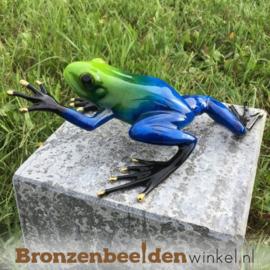 Beeld blauwe regenwoudkikker BBW0983br