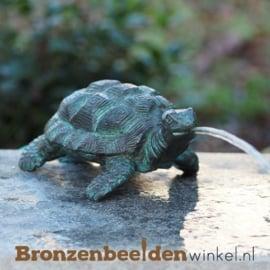 Bronzen schildpad beeld BBWAN1157br