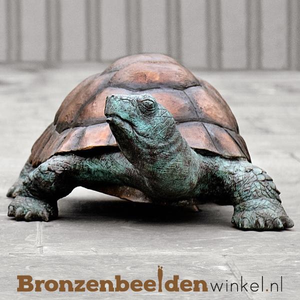 Galapagos schildpad beeld BBWB58482