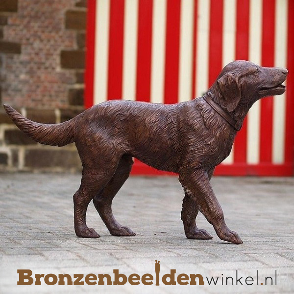 Hond beeld labrador BBW726
