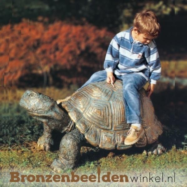 Beeld reuzenschildpad in brons BBW87058