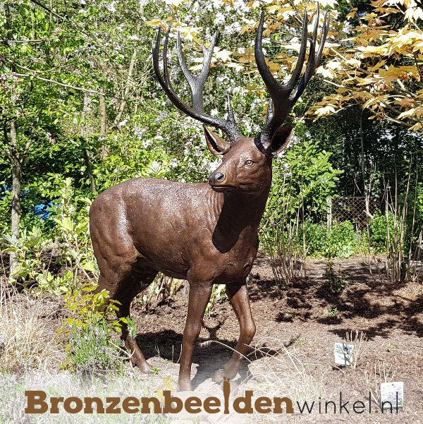 NR 6   Realistisch dierenbeeld hert BBW837