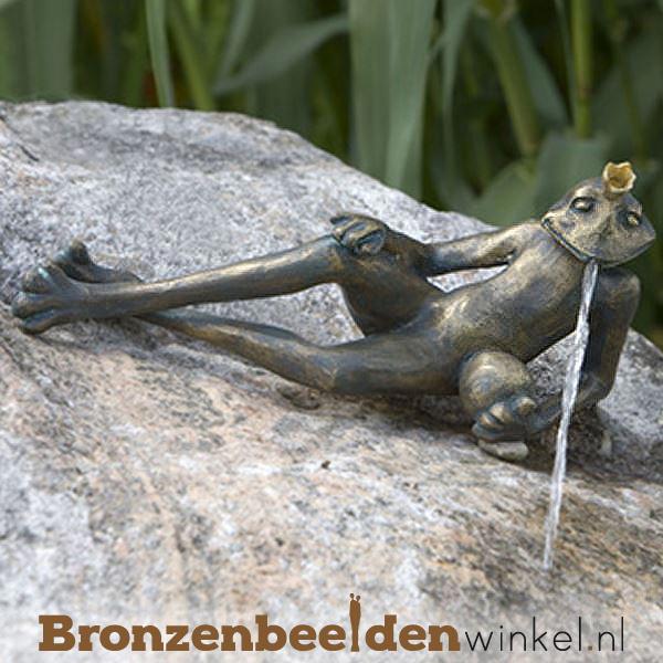 Koningskikker beeld Dieter BBWR88766
