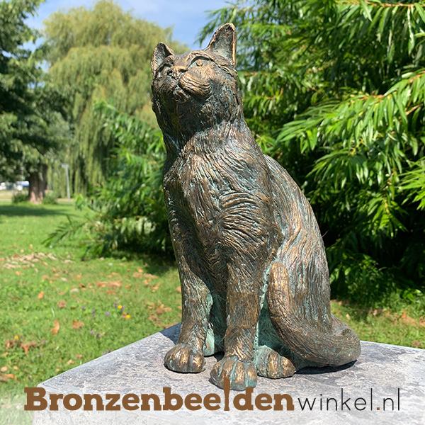 Herinnering overleden kat  BBWR89058