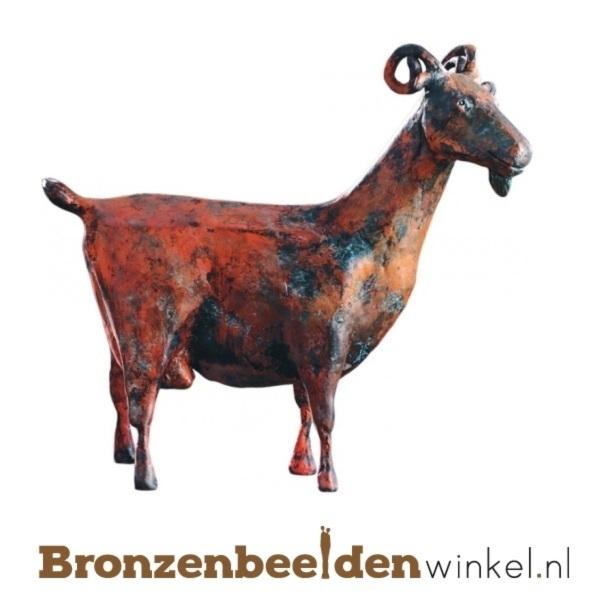 Bronzen geit BBW87178