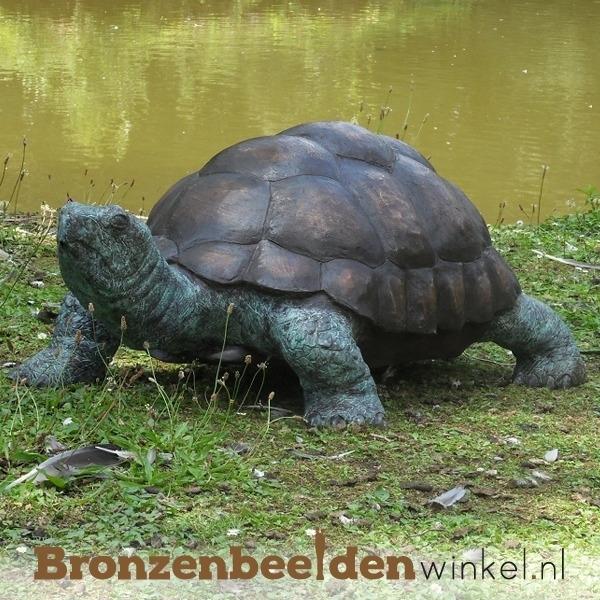Bronzen beeld reuzenschildpad BBWB58480