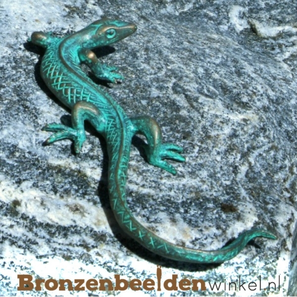 Bronzen hagedis BBW37012