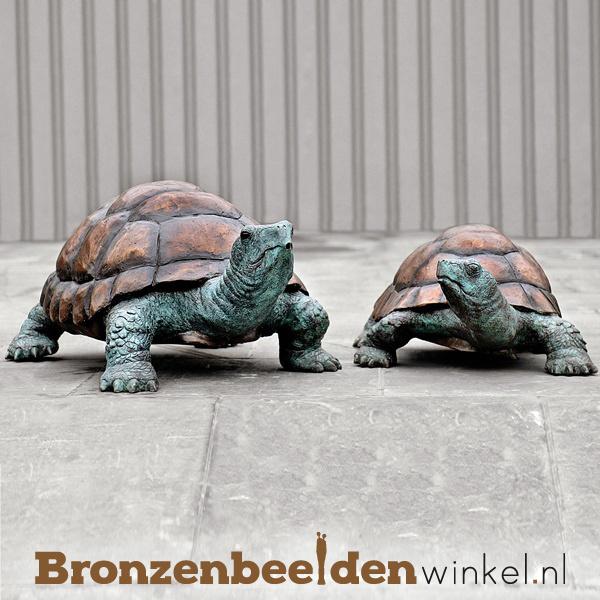Bronzen Galapagos schildpadden BBWB58483