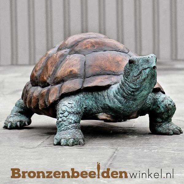 Galapagos schildpad beeld BBWB58481