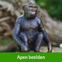 apen beelden