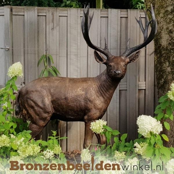 bronzen hert, tuinbeeld hert