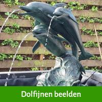 dolfijn beelden