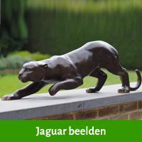 jaguar beelden