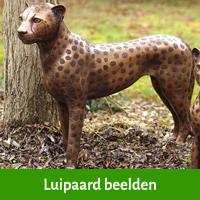 luipaard beelden
