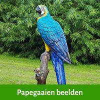 papegaai beelden