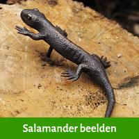 salamander beelden