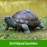 schildpad beelden