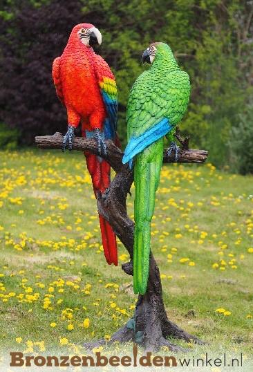 tuinbeeld papegaai