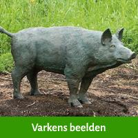 varkens beelden