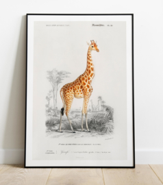 Vintage tekening van een Giraf