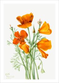 Oranje bloemen