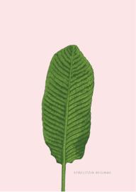 Poster Paradijsvogelplant